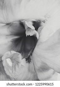 Monochrome Black and White Inner Iris Flower