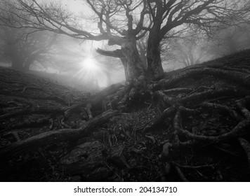 monochrome forest landscape