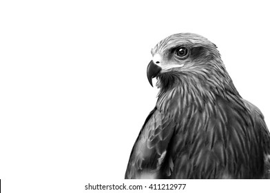 Monochrome Hawk