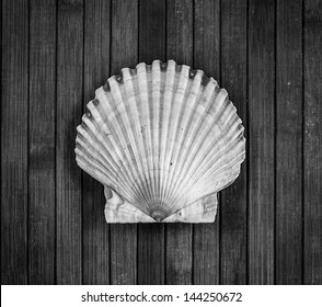 Monochrome image of big scallop on a wooden background.