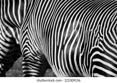 Monochrome image of black and white Zebra Stripes.