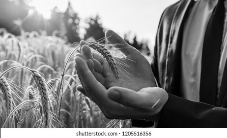 Monochrome image of businessman gently holding ripening ear of wheat in his palms. Conceptual of environment protection or business start up.