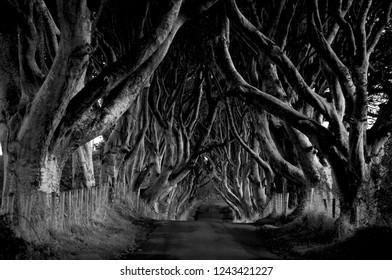 Monochrome image of the iconic Dark Hedges, Northern Ireland
