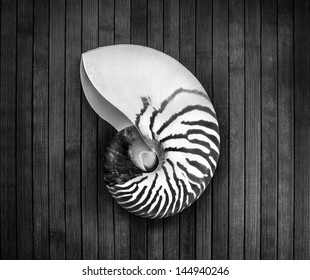 Monochrome image of striped nautilus on a wooden background.