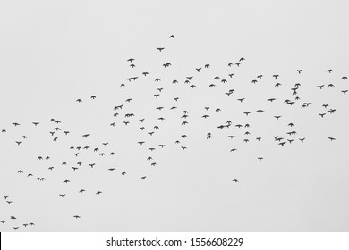 Monochrome photo depicting flock of wild birds against sky