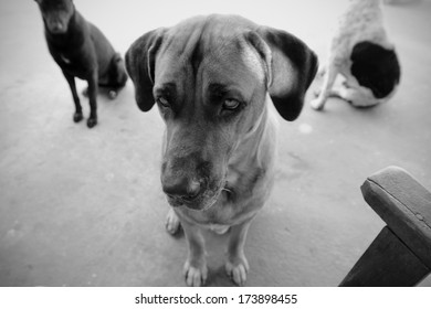 Monochrome picture of a dog