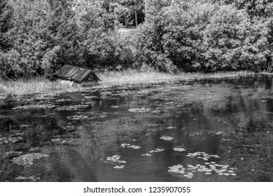Monochrome picture of flooded cabana by the marsh featuring trees on background and marsh aquatic plants