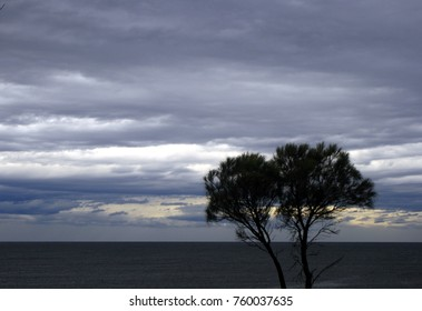 Monochrome picture of trees silhouetted against sea and coming storm clouds.