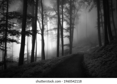 A monochrome shot of a fogy spooky forest with sunlight silhouetting the tree trunks and branches