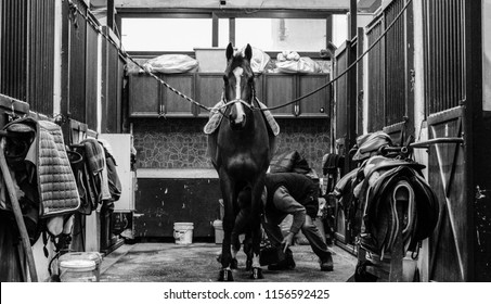Monochrome shot of a horse being saddled by a man in a barn