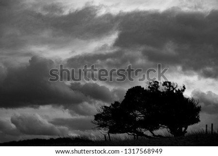 monochrome-silhouetted-windswept-stunted