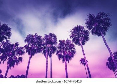 Monochrome ultraviolet toned palms of Venice beach in Los Angeles under moody overcast sky