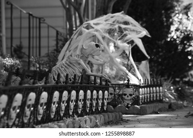 Monochrome Version of Halloween Skull Decorations Lined Up on Short Fence in Front Lawn of Townhome Guarded by the Bones of a Terror Dog with Cobwebs in the Background