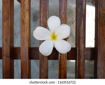 Monoi Tiare Flower Blume Tahiti