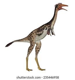 Mononykus dinosaur standing in white background- 3D render