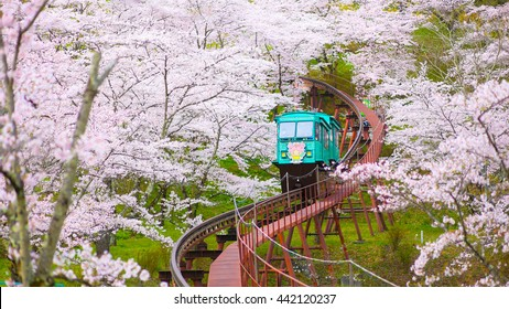 Monorail under Cherry Blossom trees at Funaoka Castle Ruin Park, Miyagi Prefecture, Japan