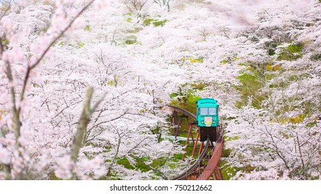 Monorail Under Sakura Trees at Funaoka Castle Ruin Park, Miyagi Prefecture, Japan