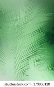 Monotone Palm Leaves