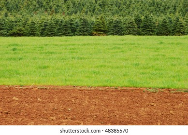 Monroe Tree Farms near Eugene OR showing a view of tree farm agriculture with a mix of trees, grass and newly cultivated fields.