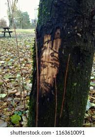 Monsieur Wonka ? Pareidolie. Dans un parc de Grenoble, une rencontre impromptue sur un arbre : un personnage qui me regarde. Serait-ce Monsieur Wonka de Charlie et la Chocolaterie ?