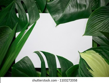 Monstera Deliciosa Pertusum Exotic Leaves Frame A Blank White Sheet Of Paper With Space For Text Or Logo. Minimal Flat Lay Design Layout..