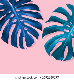 Monstera deliciosa or Swiss cheese plant Tropical leaves on pink background with copy space minimal summer