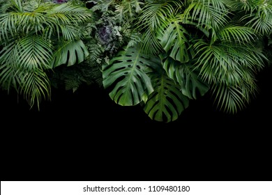 Monstera, fern, and palm leaves tropical rainforest foliage plant bush floral arrangement nature backdrop on black background.