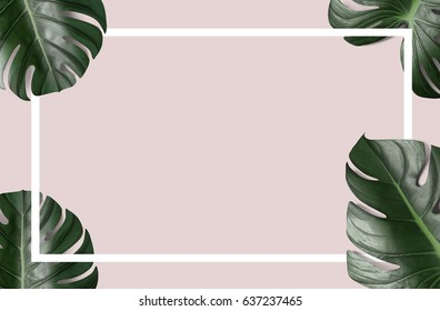 Monstera leafs background