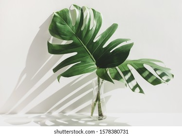 Tropical Leaf Vase Images Stock Photos Vectors Shutterstock Design great graphics about tropical vacation centers, spring break, beach and more with this set of tropical leafs and decorate your project, shop or publication, create special articles or promotions about summer vacations. https www shutterstock com image photo monstera leaves glass jug sunlight long 1578380731