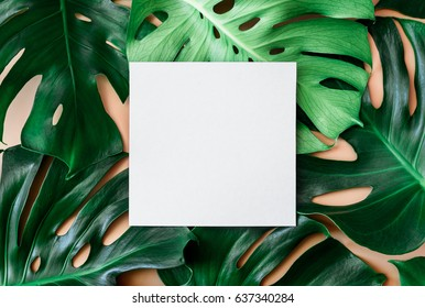 Monstera leaves template, tropical summer fashion background with a space for a text