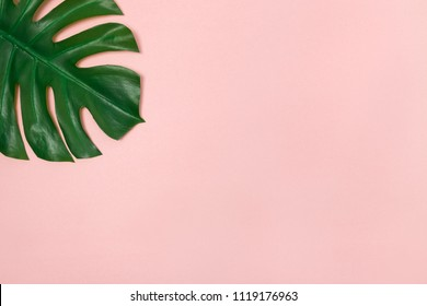 Monstera palm leaf on pale pink background. Elegant decor element.