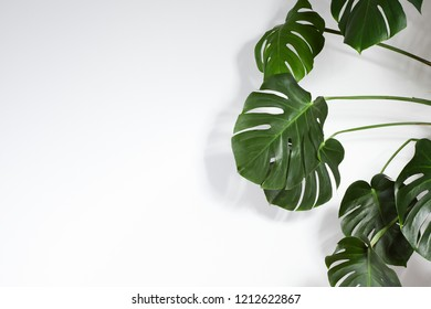 Monstera or Palm Leaves Summer Minimal White Background. Space for Text. Copyspace with Tropical Floral. Green Leaf on white Wall
