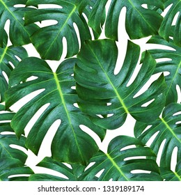 monstera plant pattern background