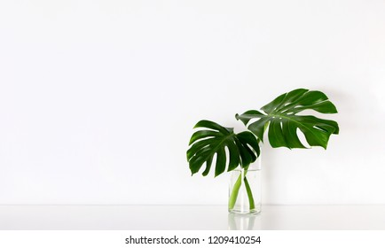 Monstera tropical palm leaves in a glass vase standing on white table, front view, space for a text