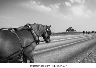 Mont Saint Michel is one of most popular tourist destinations in France can be reached by foot, in shuttle bus or in old fashioned way at horse carriage. Black and white photo.
