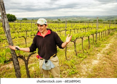 MONTALCINO, ITALY-MAY 13: Unidentified man stands in his vineyard on May13, 2014 near Montalcino, Val d'Orcia, Tuscany, Italy. Montalcino is famous for its Brunello di Montalcino wine.