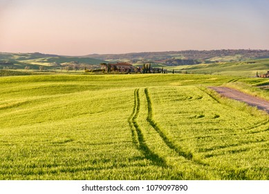 Montalcino, Siena - April 21 2018: panorama of the Brunello wine lands in the spring with hills covered with soft green grass in the town of Montalcino in the Siena area during the hot spring