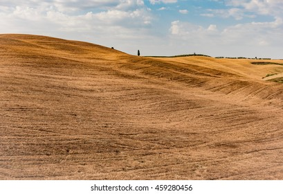 MONTALCINO, SIENA, JULY 22, 2016 -  panorama of the Tuscan cypress trees in the Val d'Orcia in the summer in the Tuscan countryside near Siena Montalcino