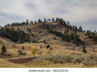 Montana hillside landscape with dead trees showing path of previous wildfire