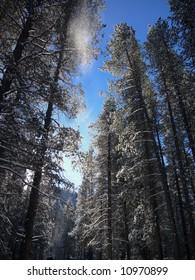 Montana in Winter