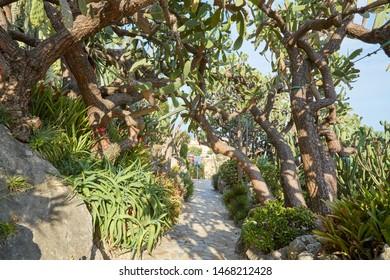 MONTE CARLO, MONACO - AUGUST 20, 2016: The exotic garden path with rare succulent plants in a summer day, sunlight in Monte Carlo, Monaco.