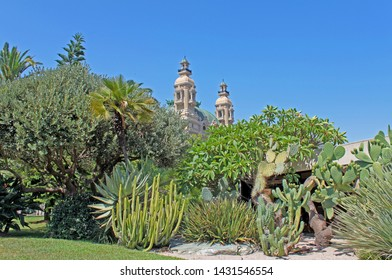 Monte-Carlo, Monaco – August 3, 2013:  gardens of little Africa near the casino and the opera house