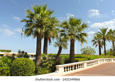 Monte-Carlo, Monaco – August 3, 2013: footpath in the gardens of little Africa near the casino and the opera house