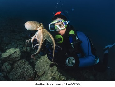 Montenegro, Adriatic Sea, U.W. photo, small octopus and diver - FILM SCAN