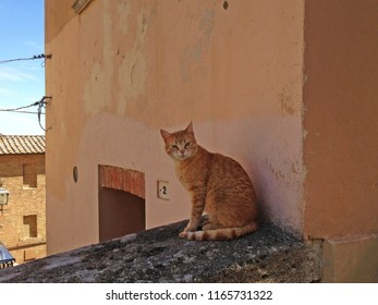 Montepulciano cat on the street
