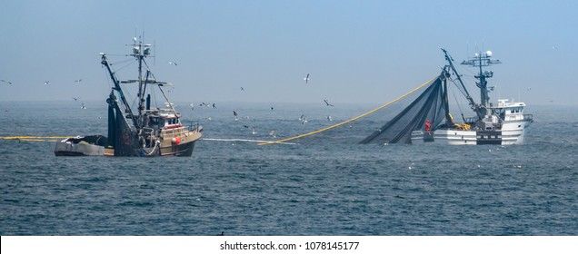 Monterey, California - April 23, 2018: Commercial squid fishing boats work around the clock, including daylight hours, using purse seine nets as squid return to the waters of the Monterey Bay.