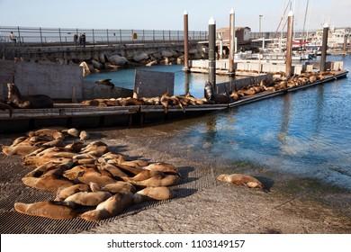 MONTEREY, USA-JUNE 13, 2017: Tourist watching seals in Monterey Bay. California, USA on June 13, 2017