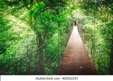 Monteverde Cloud Forest, Hanging bridge, Canopy Tour. Costa Rica