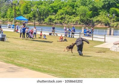 MONTGOMERY, ALABAMA - MARCH 31, 2018: Free K-9 Police Dog demonstration by Montgomery, Alabama Police Department: Montgomery Police Department puts on a free public K-9 Police demo at Riverwalk Park.
