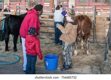 Montgomery, Alabama, USA - October 29, 2017: A girl answers questions about her show heifer from fair goers in the barn area of the Alabama National Fair.